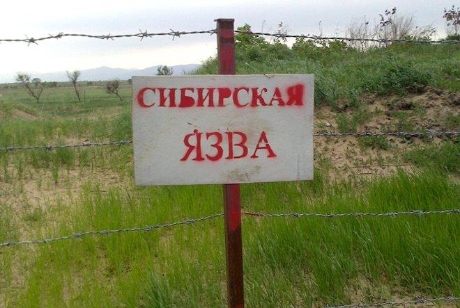 табличка сибирская язва
