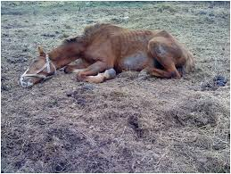 заболевание поражает травоядных животных