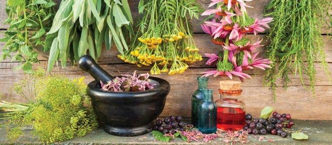 Лучшие травяные сборы для лечения язвы
