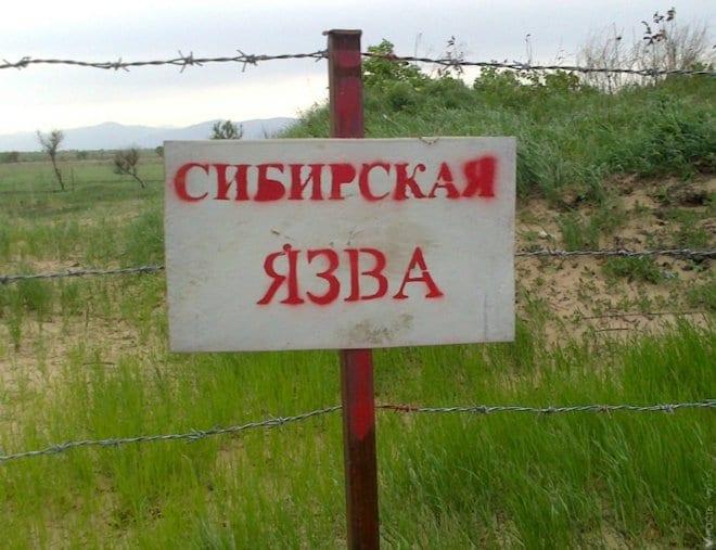 земля и вода заражаются спорами палочки сибирской язвы